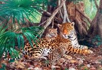Ягуары в джунглях
